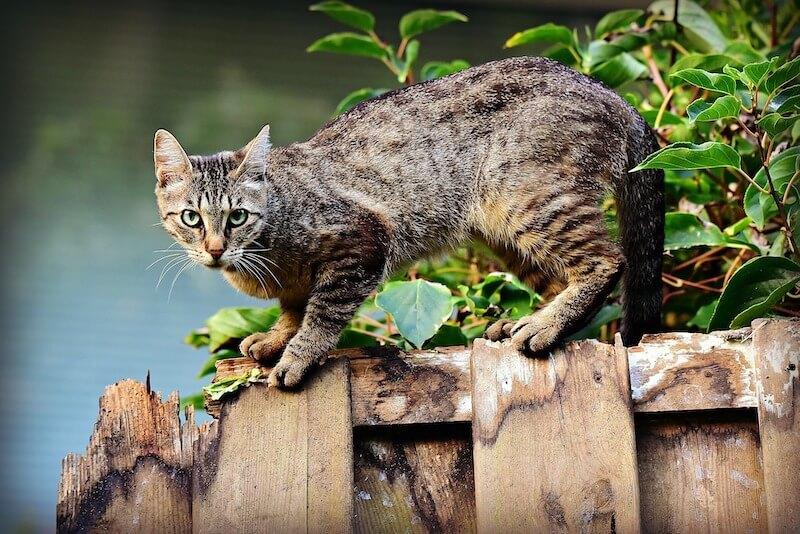 Katze auf Zaun
